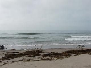 海一面ゴミだらけ