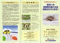 アカウミガメ保護活動01