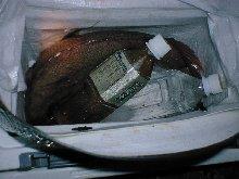 ペットボトルとは比べものにならない、肉厚の真鯛の写真です。
