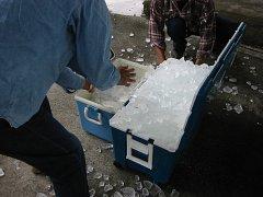 伊良湖市場で氷を調達しました。